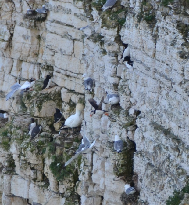 The sea of Bempton Cliffs